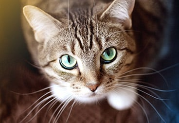 Cute Green-Eyed Brown Cat