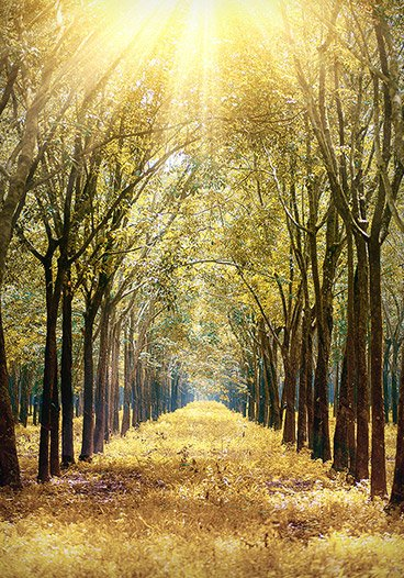 Golden Forest Trees