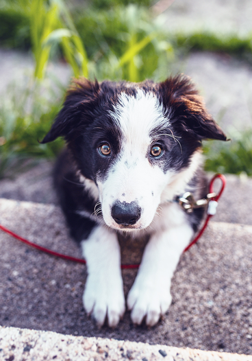 Cute Black and White Puppy Outside